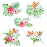 Vattenfärgen ställde in tropiska buketter stock illustrationer