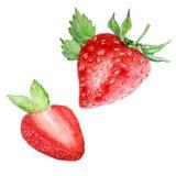 Vattenfärgen ställde in två röda jordgubbar vektor illustrationer