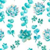 Vattenfärgeukalyptussidor och suckulent Hand målad filial för vattenfärgmodelleukalyptus stock illustrationer