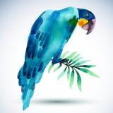 Vattenfärgfågel Blå papegoja som isoleras på vit bakgrund vektor illustrationer