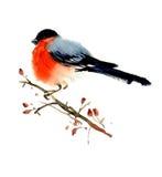 Vattenfärgfågelillustration Arkivbild