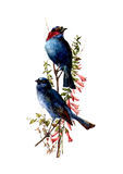 Vattenfärgfågelillustration Royaltyfri Bild