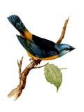 Vattenfärgfågelillustration Arkivfoton