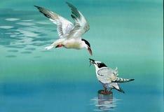 Vattenfärgfåglar stock illustrationer