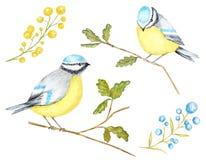 Vattenfärgfåglar BlueTit som sitter på filialen som isoleras på vit bakgrund stock illustrationer