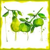 Vattenfärgfilial med päron och äpplen Royaltyfri Fotografi