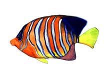 Vattenfärgfisk Illustration för havsfisk Royaltyfri Fotografi