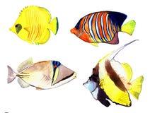 Vattenfärgfisk Illustration för uppsättning för havsfisk Royaltyfri Bild