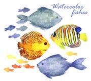 Vattenfärgfiskuppsättning Arkivbild