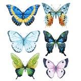 Vattenfärgfjärilar Arkivbild