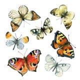 Vattenfärgfjärilsuppsättning Royaltyfria Bilder