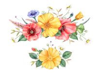 Vattenfärggarneringar med vildblommor som isoleras på vit bakgrund Hand målade illustrationen royaltyfri fotografi