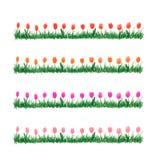 Vattenfärggräs med blommor Arkivbilder