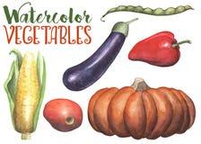 Vattenfärggrönsaker på vit bakgrund Handdrawn grönsaker isolerade Hand-målad pumpa, aubergine, tomat royaltyfri illustrationer