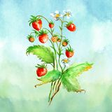 Vattenfärghälsningkort, inbjudan med en växtjordgubbe Blomstra busken med ett röd bär och blomma royaltyfri illustrationer