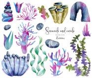 Vattenfärghavsväxt- och havsstencolllection stock illustrationer