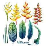 Vattenfärgheliconiasamling stock illustrationer