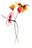 Vattenfärgillustration av blommor Royaltyfria Foton