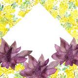 Vattenfärgillustration av blommor och filialer av mimosan på en vit bakgrund Målad hand, gul illustration för vår för friare stock illustrationer