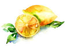 Vattenfärgillustration av citronen Arkivfoto