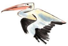 Vattenfärgillustration av pelikan Fotografering för Bildbyråer