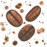 Vattenfärgillustration med kaffebönor och färgstänk på vit Royaltyfri Bild