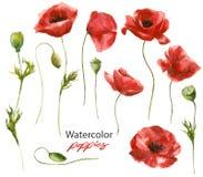 Vattenfärgillustration - uppsättning av röda handdrawn vallmo vektor illustrationer