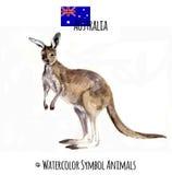 Vattenfärgillustrationen av en känguru skissar Fotografering för Bildbyråer