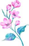 Vattenfärgillustrationen blommar i enkel bakgrund Royaltyfria Bilder