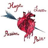 Vattenfärgillustrationen med att blöda mänsklig hjärta trängde igenom vid en pil stock illustrationer