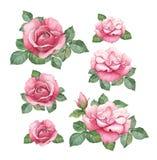 Vattenfärgillustrationer av rosor royaltyfri illustrationer