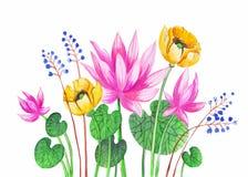 Vattenfärgillustrationrosa färger Lotus vektor vektor för detaljerad teckning för bakgrund blom- Royaltyfria Foton