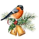 Vattenfärgjulkort med domherren och feriedesign Handen målade fågeln med klockor, järnek, den röda pilbågen, bär, gran stock illustrationer