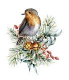 Vattenfärgjulkort med rödhaken, klockor och vinterdesign Handen målade fågeln med eukalyptussidor, guld- klockor vektor illustrationer