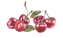 Vattenfärgkörsbär på vit bakgrund stock illustrationer