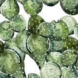 Vattenfärgkaktusmodell Royaltyfri Fotografi