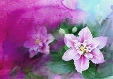 Vattenfärgklematis Fotografering för Bildbyråer