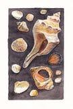 Vattenfärgkonst det fästande ihop isolerade banahavet shells white Fotografering för Bildbyråer