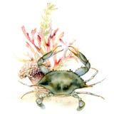 Vattenfärgkrabba, korall och havsväxtsammansättning Handen målade den undervattens- illustrationen med laminaria- och korallreven arkivbilder