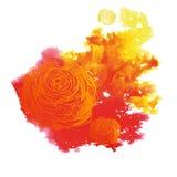 Vattenfärgkronärtskocka Arkivfoton