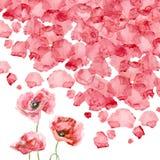Vattenfärgkronblad av en vallmo Royaltyfri Foto