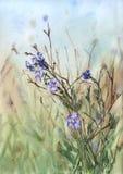 vattenfärglandskap med ängen och purpurfärgade blommor stock illustrationer