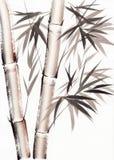 Vattenfärgmålning av bambu Royaltyfria Bilder