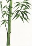 Vattenfärgmålning av bambu Royaltyfri Fotografi