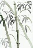 Vattenfärgmålning av bambu vektor illustrationer