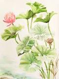 Vattenfärgmålning av den lotusblommasidor och blomman Arkivbilder