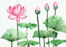 Vattenfärgmålning av den rosa lotusblommablomman Arkivfoton
