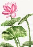 Vattenfärgmålning av den rosa lotusblommablomman Royaltyfri Bild