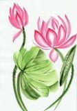 Vattenfärgmålning av den rosa lotusblommablomman Fotografering för Bildbyråer