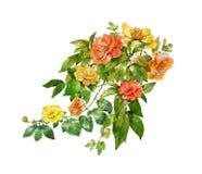 Vattenfärgmålning av sidor och blomman, på vit bakgrund royaltyfri illustrationer